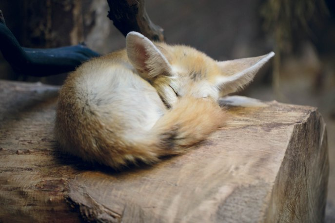 Snooze.